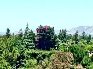View from the hospital room - notice the tree with the blooms growing out of the top of it!